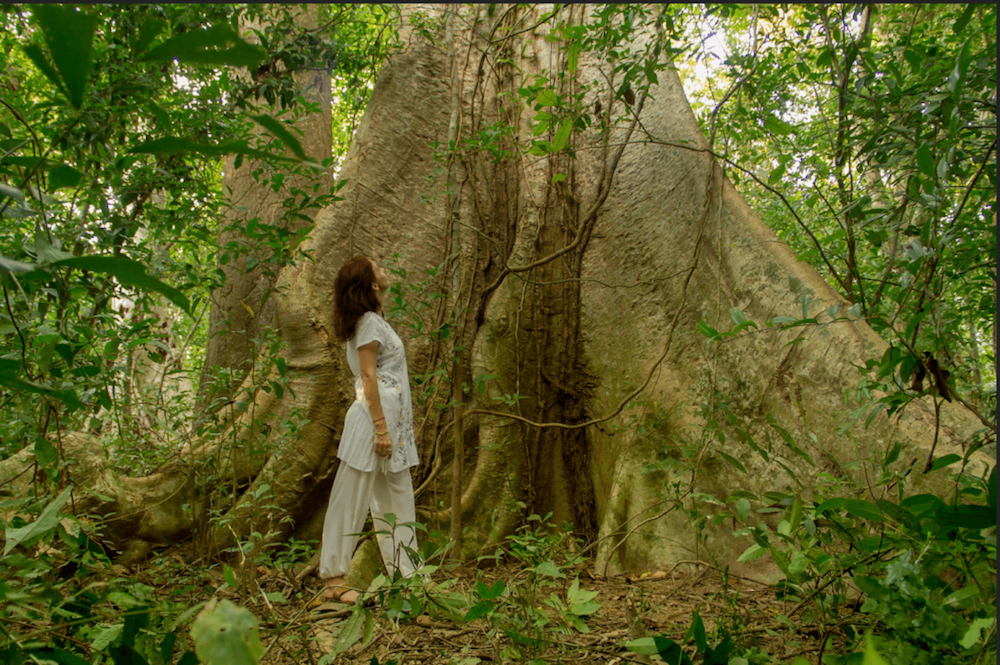 Forest Bathing Retreat in Cambodia - Soul's Escapes